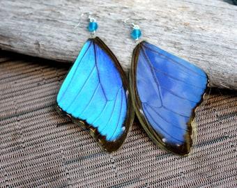 Large Blue Butterfly Earrings, Real Butterfly Wing Earrings, Real Blue Morpho Butterfly Wing Earrings