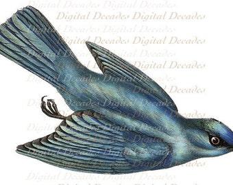 Blue Bird of Happiness - Digital Image - Vintage Art Illustration