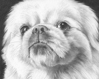 Custom Pet Portrait in Graphite - 8x8 or 8x10