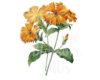 Floral Digital Download Flower Clip Art for Invitations, scrapbook, Card making, collage, prints - 1276