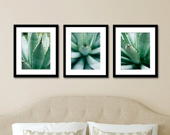 Set of 3 Agave Prints, Succulent Photography, Abstract Leaf Photo, Affordable Wall Art, Gallery Wall Art, Green Home Decor, Leaf Art