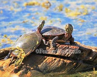 Painted Turtle Photography Marsh Swamp Nature Outdoor Wall Art Kids Boys Girls Room Decor Two Turtles Log Tree Stump Reptile Animal Print