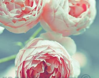 Pink Roses Print with Blue Teal - Girl Nursery Decor - Flower Photograph, Nature Photography