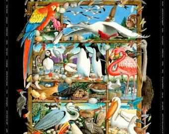 "Bird Cotton Fabric  - Bird Watching Panel by Laura Seeley for Elizabeth Studio - 7005 Black - 36"" Panel"