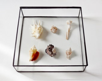 "10"" x 10"" Glass Box, Large Glass Display Box, Glass Jewelry Box, Gift For Her, Wedding Display Box, Clear Glass Jewelry Box."