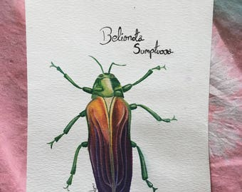 Belionata Sumptuosa, Jewel beetle watercolour painting
