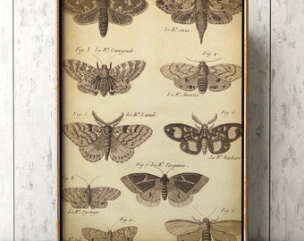 Large Butterfly poster, Butterfly poster A3, butterflies wall decor, scientific butterflies study, antique butterfly, black and white print