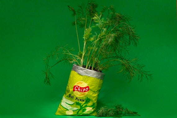 DILL PICKLE CHIPS planter