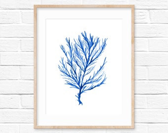 Seaweed No.103 Blue Watercolor Print, Watercolor Sea Life Art Print, Seaweed Art Print, Watercolor Art Print, Giclee Print, Beach House Art