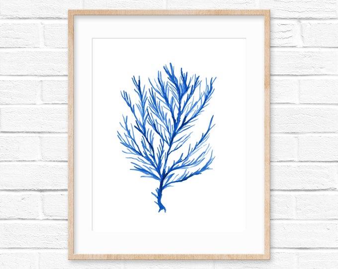 Seaweed No.103 Blue Watercolor Print, Watercolor Sea Life Art Print, Seaweed Art Print, Watercolor Art Print, Giclee Print, Beach House Art