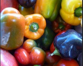 Colorful Mixed Bells 20+ seeds ~ mix of all heirloom sweet bell peppers