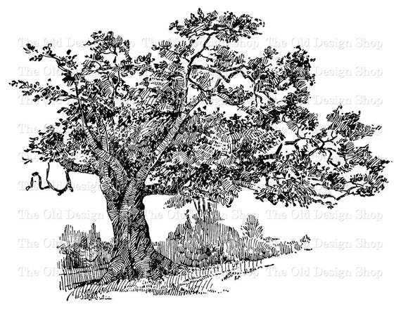 Vintage charter oak tree illustration commercial use botanical thecheapjerseys Gallery