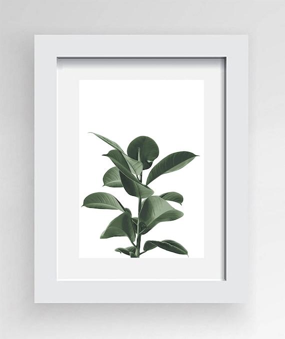 Rubber Fig Leaves Botanical Print   Digital Download Artwork A4 And A3    Floral Design