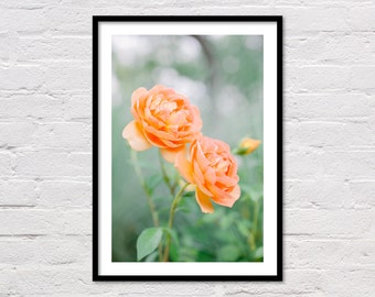Peach Garden Roses, Botanical Wall Art, Orange Rose Print, Peach Floral Art, Orange Printable, Rose Photo, Flower Photography, Download