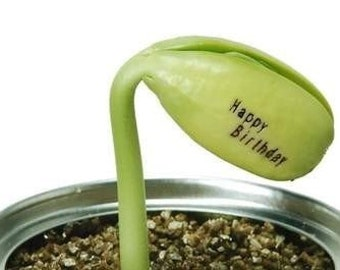 Magic Growing Message Beans
