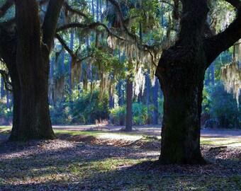 Nature Photography - Draped in Spanish Moss - Savannah, Georgia - Landscape, Southern, Travel, Summer, Fine Art Photography