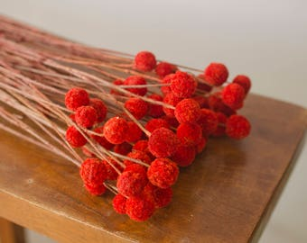 Bunch of Red-Orange Craspedia, Red Billy Balls, Billy Buttons, red dried flowers, red-orange dried flowers, fall wedding flowers