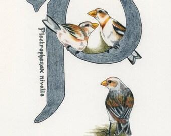 Avian Alphabet P