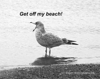 Seagull humorous card - Get Off My Beach - Seagull, blank greeting card, write your own msg