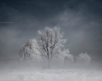 frosted trees in Winter snow steam fog nature fine art photography home decor office decor
