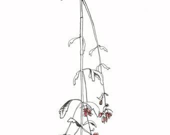 SALE - A5 Art Print / Postcard, Dried Flower #01, Illustration, Watercolor and Pen