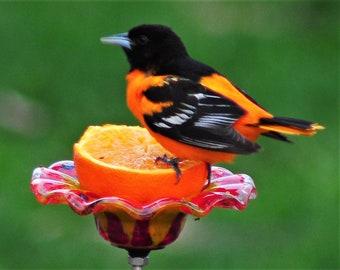 Oriole/Bird Feeder Stake