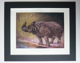1909 Antique Print Of An Indian Rhinoceros By Cuthbert Edmund Swan - Indian One Horned Rhino Print - Wild Animal - Vintage Print - Nature