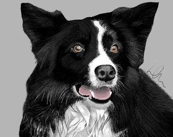 Border Collie in pencil crayon