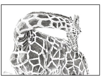 Giraffe Pen and Ink Drawing Print Signed by Artist