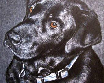 Custom Dog Portrait 8 x 10 Colored Pencil Art by Carla Kurt cat dog horse memorial pet portrait