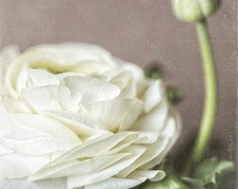 White Flower Print or Canvas Art, Flower Print, Nature Print, Cottage Decor, Bathroom Decor, Bedroom Decor, Floral, Cream.