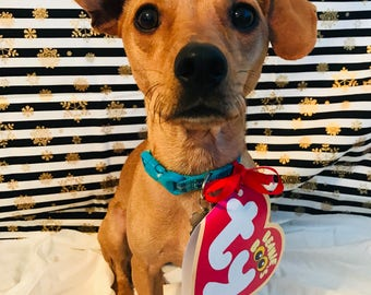 Photo realistic TY Beanie Baby Heart Tag - Dog & Pet Halloween Costume - Photo Prop- Customizable!