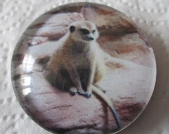 Meerkat Magnet - 1 1/2 inch Round with Glass Dome