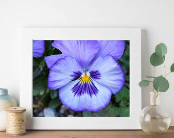 Nature Photography – Wall Art Print – Purple Pansy Flower – Photography Prints – Close Up – Macro Photography – Pansy Art – Spring Flowers