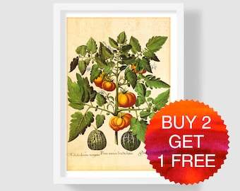 Yellow Tomato Art Print, Tomato Wall Art, Tomato Kitchen Decor, Vintage Botanical Print, Yellow Tomato Print, Tomato Home Decor, Besler 1640
