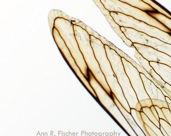 Cicada Wings Photo #2, Metallic Print, Fine Art Photography, Nature Photography, Cicada Photography, Cicada Art, Minimalist Art