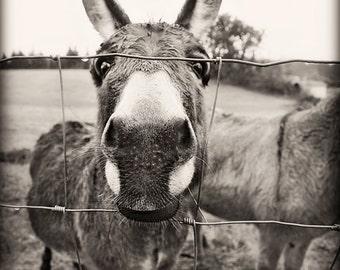 Want a kiss?