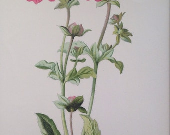 1879 Crimson Avens Original Antique Botanical Lithograph - Botany - Flower - Wall Decor  - Home Decor - Matted & Ready to Frame