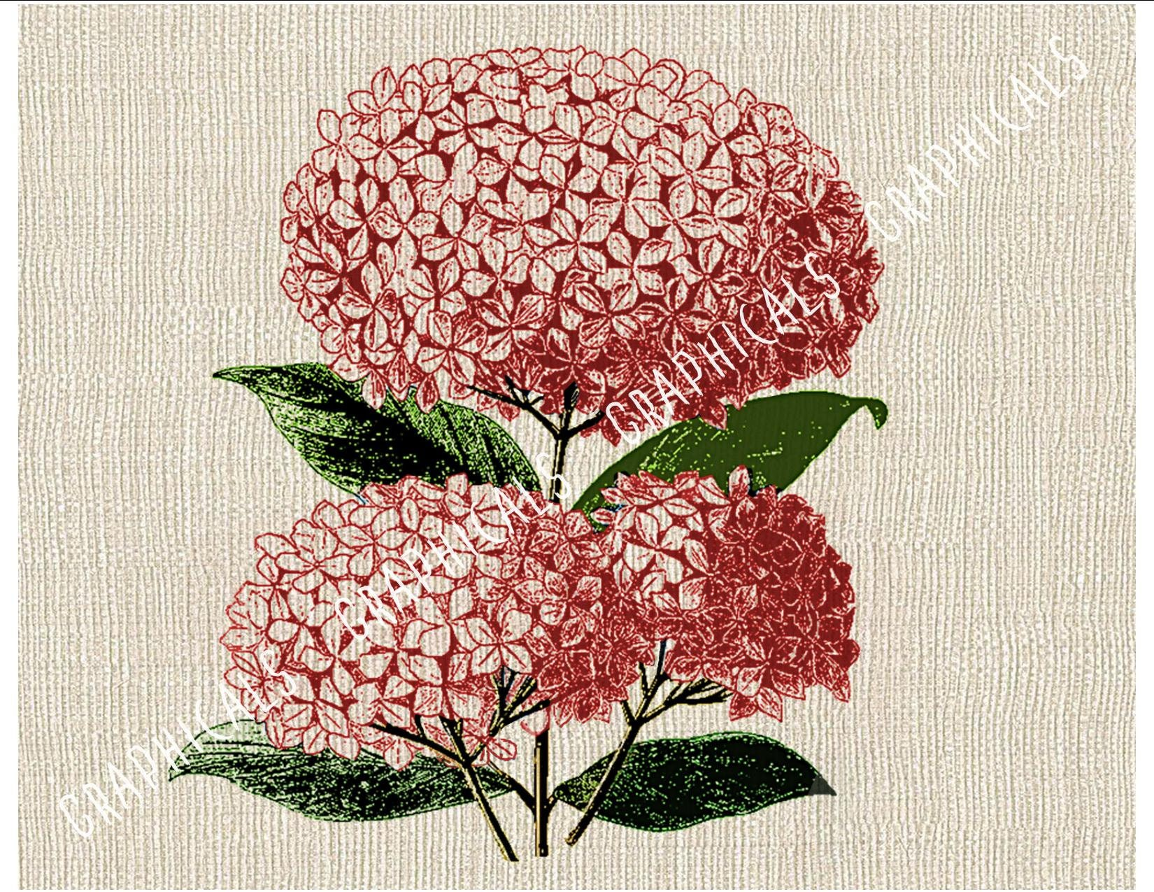Pink hydrangea hortensia flowers Instant Digital download