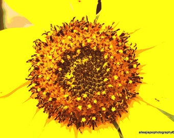 Purge Stars, Nature Photography, Bright Yellow Sunflower, Ants, Anther, Positivity, Love Life, Fine Art Photo, Photo Print, Large Wall Art