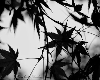 Japanese Maple (BW) : surreal photo leaf photography black white silhouette monochrome winter home decor 8x10 11x14 16x20 20x24 24x30