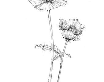 California Poppies 8x10 Digital Download