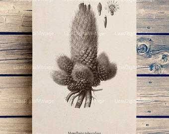 Cactus print, Cactus wall art, Cactus printable, Cactus flower, Cactus art print, Instant download print, Cactus clip art, Wall art print