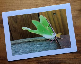Luna Moth Photo Card