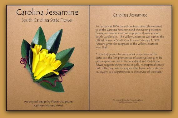 South Carolina State Flower Yellow Jessamine