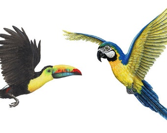 Tropical Birds Combo Wall Decals