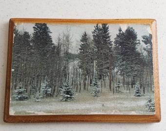 White Winter Aspens and Pines - Corner