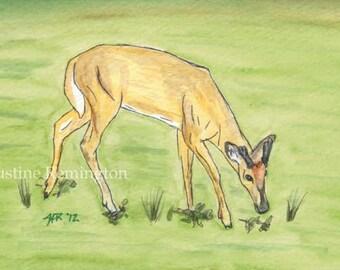 Young Buck Grazing - Original watercolor painting 6x4