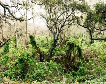 """Landscape Photography, Fine Art, Nature Photography, California, Zen, Santa Cruz, Green, -""""Herbiture"""""""