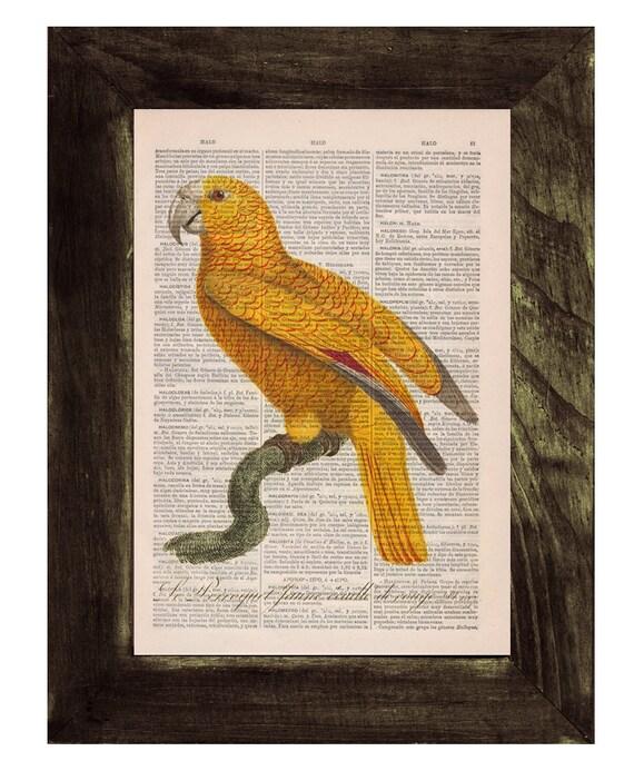 Yellow Parrot Exotic Bird Dictionary print Book print Natural illustration Upcycled page Print Wall decor Art BPAN078